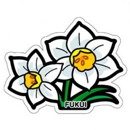 (Fukui) Narcisse