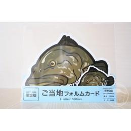 Mérou longues dents (Wakayama)